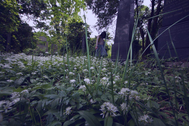 brocarde in overgrown graveyard vienna